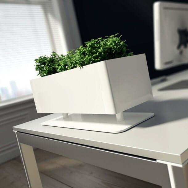 Artificial Plants in Rectangular Shaped Pots - Comfort Furniture
