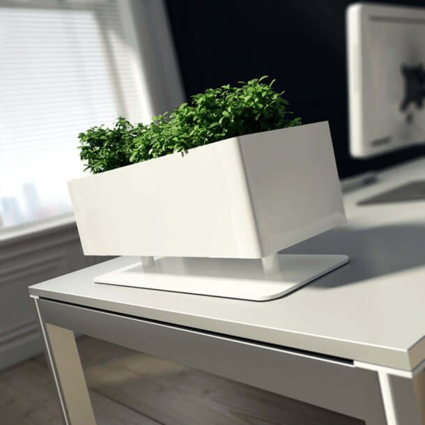 Artificial Plants in Rectangular Pots for Office Decorative Purposes - Comfort Furniture