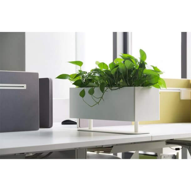 Decorative Plants to create a Relaxing Office Environment - Comfort Furniture
