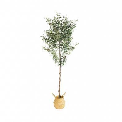 Tree - Olive H1800