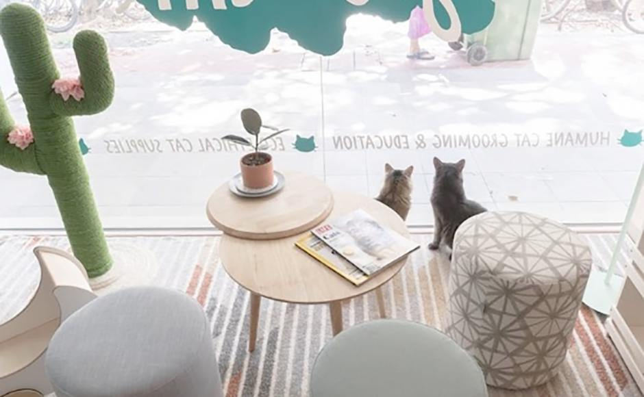Hey Good Cat | Product Seen: [Pouf Round]