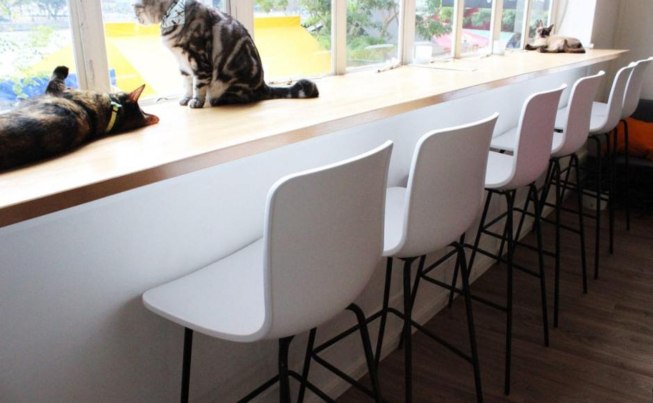 Cat Cafe - Boat Quay | Product Seen: [Plug + 4-Leg Barchair]
