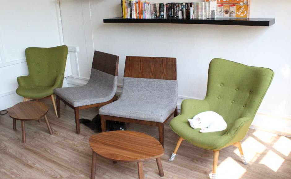 Cat Cafe - Boat Quay | Product Seen: [Brandy & Joan Lounger]<br />