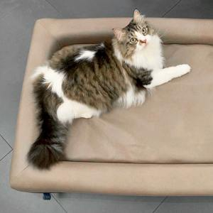 Baton Pet Bed - L Size