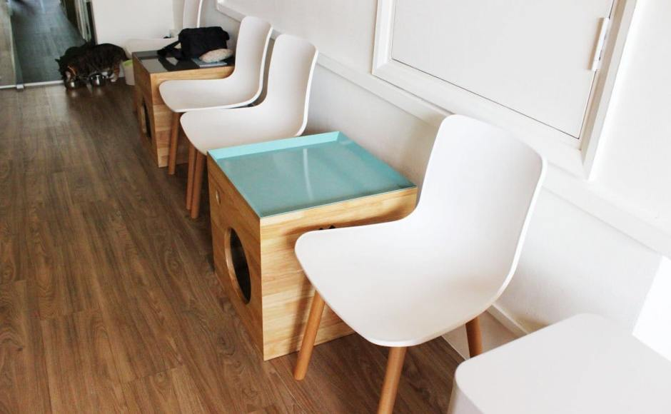 Cat Cafe - Boat Quay | Product Seen: [Plug + Round Leg Chair]