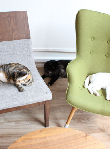 Pet-friendly Home Design - Color of Furniture