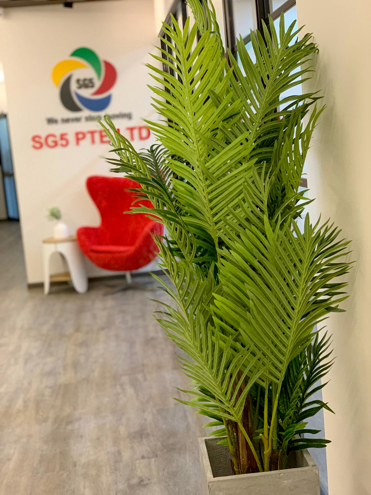 SG5 Pte Ltd - Changi South | Product seen: [Tree - Hawaii Palm H1700]