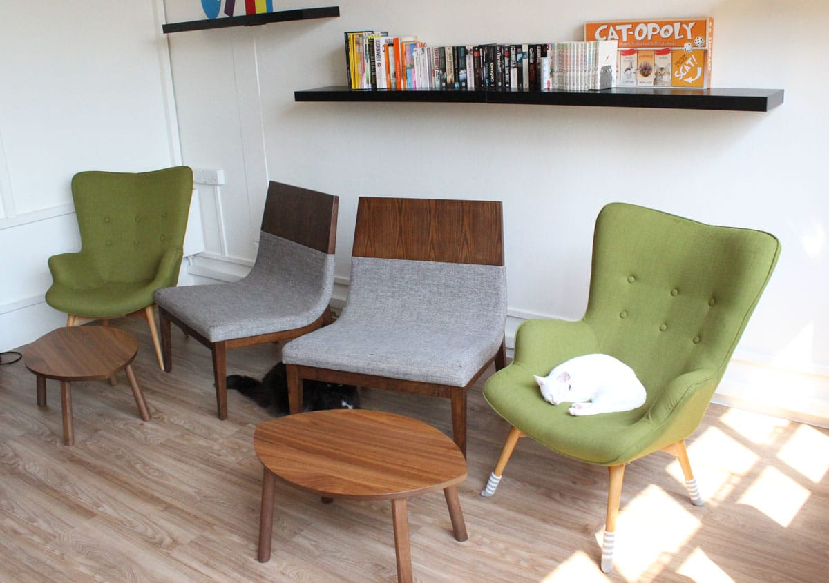 Cat Cafe - Boat Quay | Product Seen: [Brandy &amp; Joan Lounger]<br />